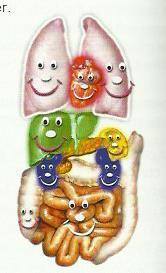 orgaos coloridos100bpi (1)